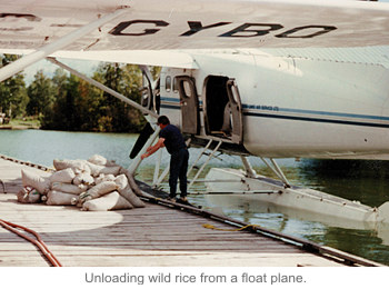 Unloading wild rice from a float plane